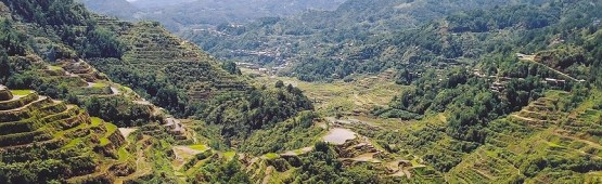 800px-Rice_Terraces_Banaue